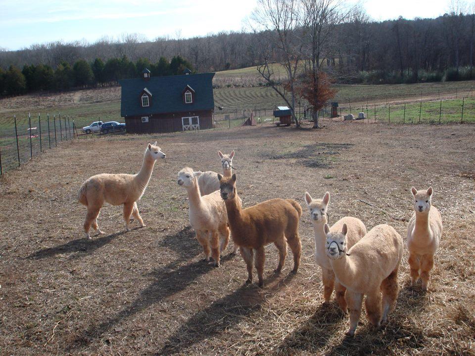 Rayburne Ridge Farm, LLC - South Carolina Department of