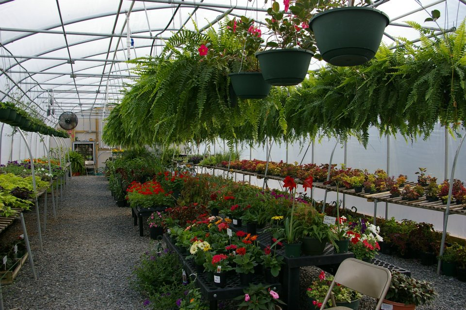 Griff S Greenhouse And Nursery