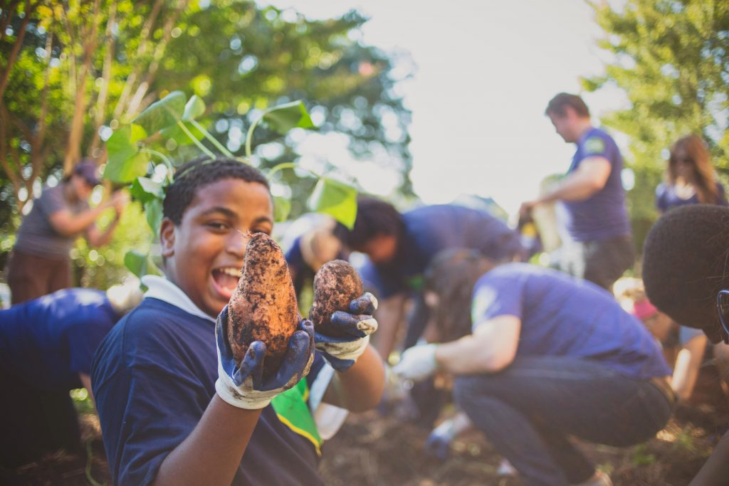 South Carolina students harvest sweet potatoes planted as part of the Green Heart Project. Courtesy photo.